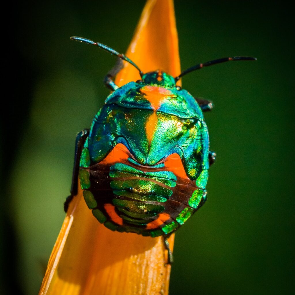 pretty green beetle